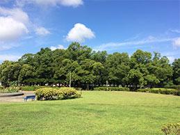 芝生広場画像
